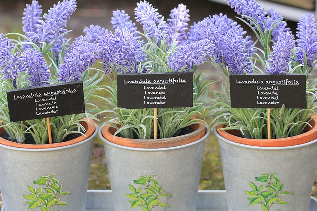 You can also use lavender pots to chase insects away from your bedroom.