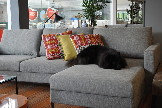 With this trick pet hair on your sofa will not be a hassle to clean anymore.