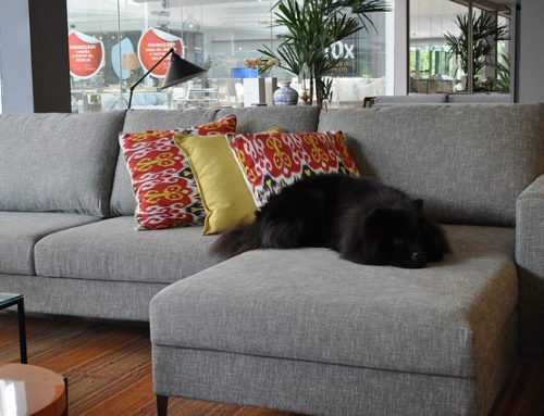 5 Upholstery Cleaning and Maintenance Hacks to Keep Your Sofa As New