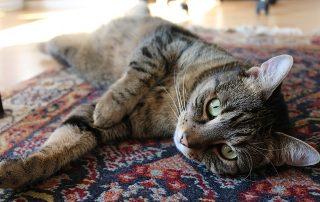 animal-fur-carpets